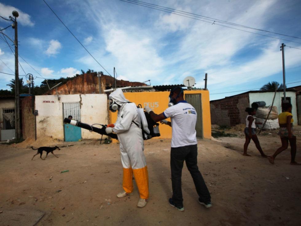 Insatser för att döda myggorna som sprider viruset är i full gång.