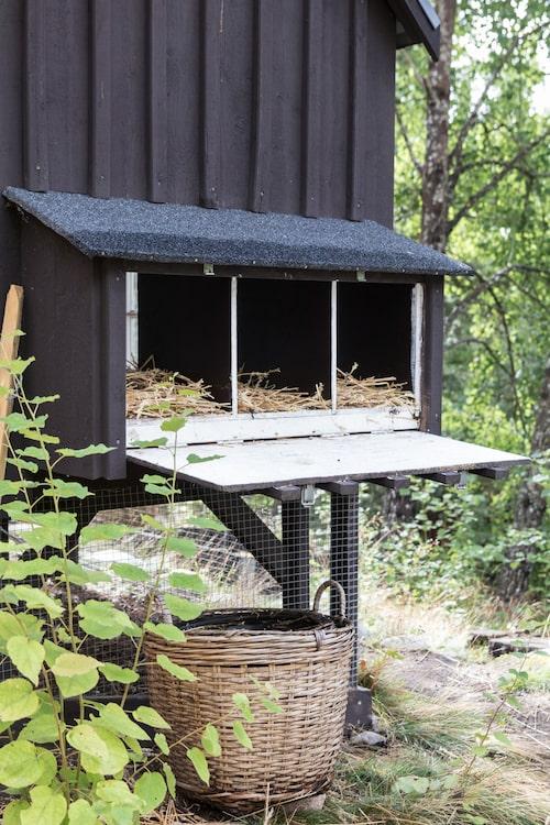 På baksidan av hönshuset byggdes tre stycken reden med en lucka som går att öppna. Där lägger hönsen sina ägg och det går lätt att plocka fram dem.