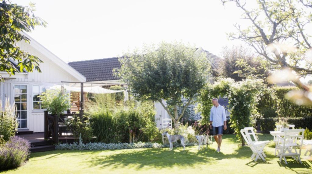 """<p>Favoritplatsen i trädgården är vid baksidan av huset. På dubbelbågen klättrar två vita blåregn """"Clara mack"""" och i mitten syns klematisen """"Paul farges""""</p>"""