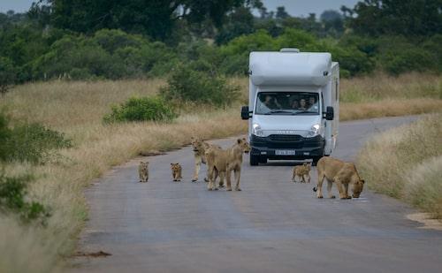 I Kruger är det tillåtet att köra själv med egen bil. Det kan vara ett spännande komplement, men upplevelsen förhöjs nästan alltid tillsammans med en guide.