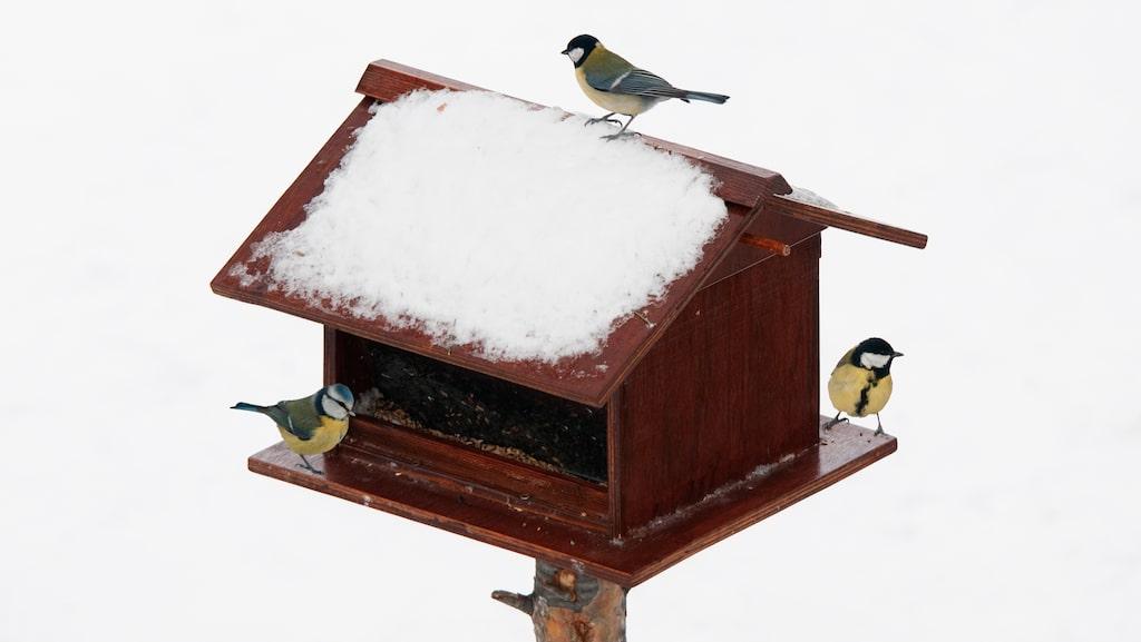 Vi sätter gärna ut mat i olika små fågelhus, fågelbord och fågelmatare. Och marknaden svämmar över av olika varianter att välja på.