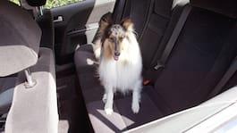 Straffbar dödsfälla att lämna hund i varm bil