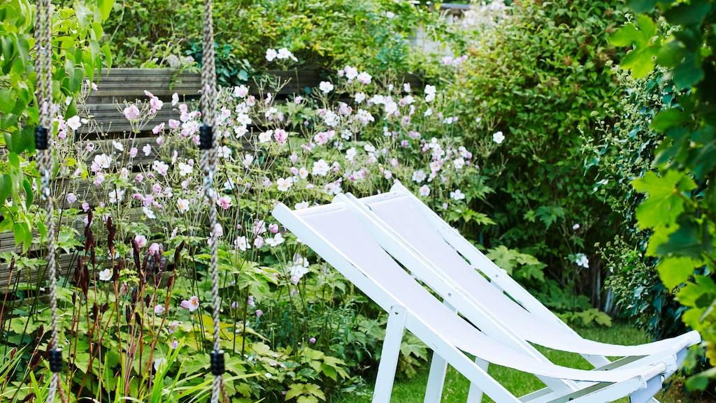 Ingen riktig trädgård utan en gunga. Invid gungan slingrar sig en vinranka. I rabatten växer höstaneminer, daggkåpa och frodig veronika.