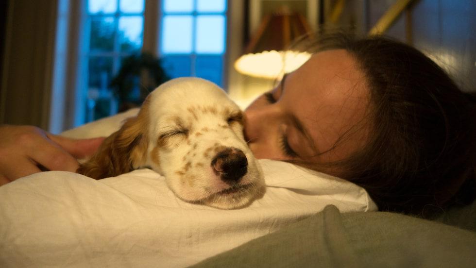 Hundar drömmer med allra största sannolikhet om sina största intressen.