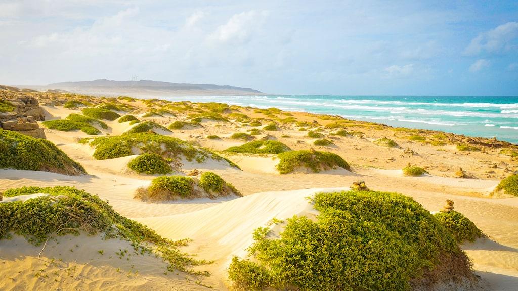 Kap Verde är solsäkert och torrt. Vågorna kan vara höga för barn men är åtråvärda för surfare.