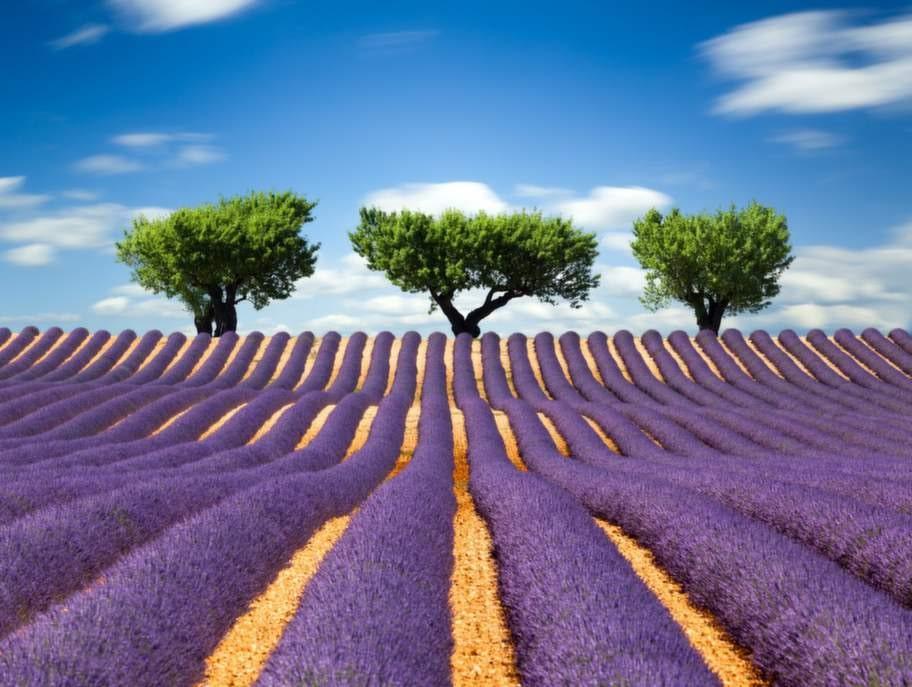 En halvtimme med bil, längre är det inte att nå Provences vackra natur från franska Rivieran.