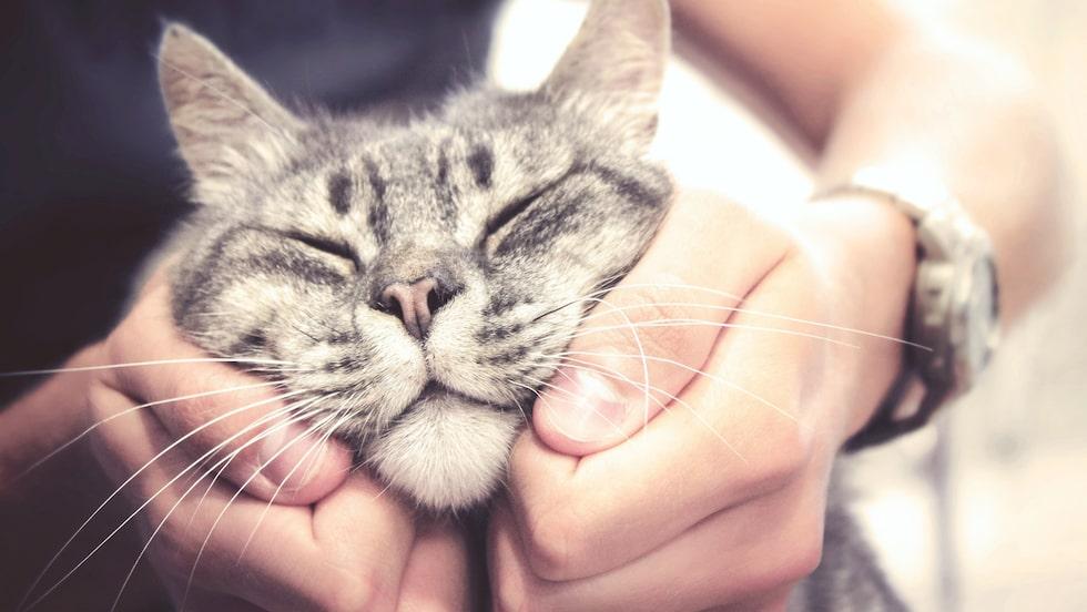 """Kattkliniken Just Cats Veterinary Clinic söker nämligen en """"professionell kattklappare""""."""