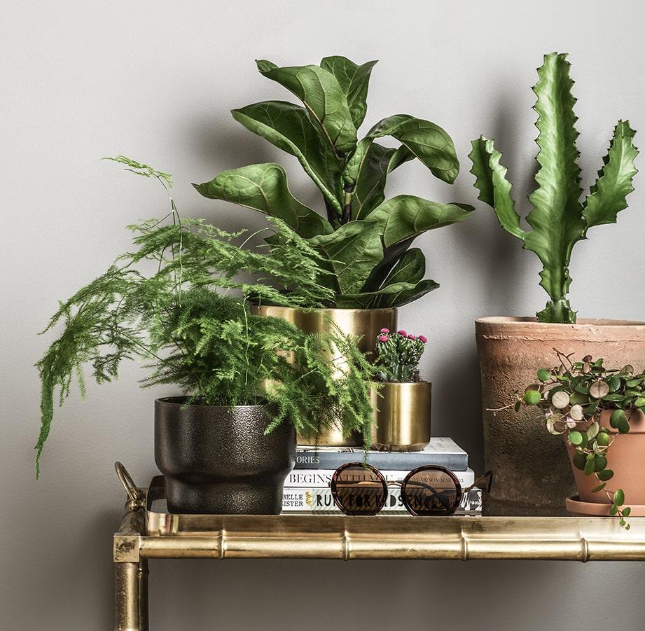 Alla växter som på något sätt har en egen attityd är de som kommer att vara populära under 2017. De som står ut lite från mängden i form och uttryck.