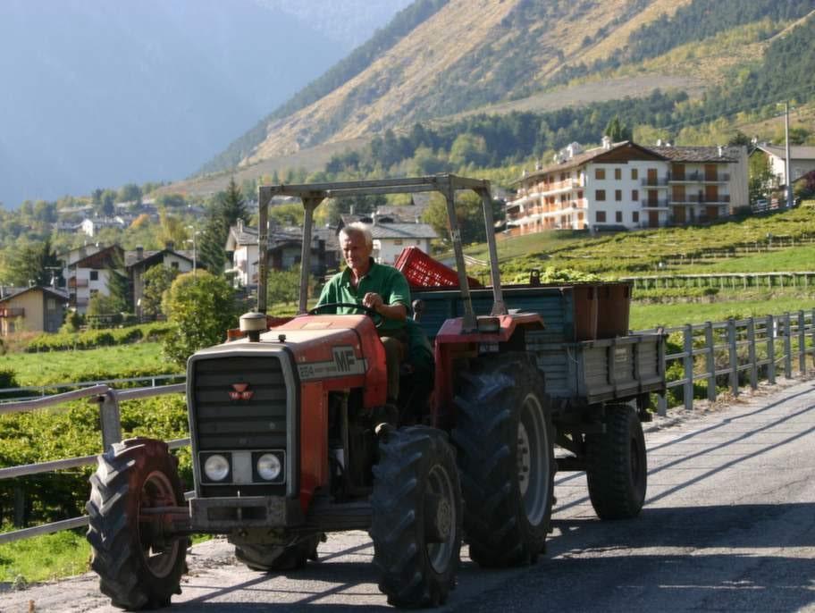 Piemonte, Italien. I italienska Piemonte finns den åtråvärda vita tryffeln.