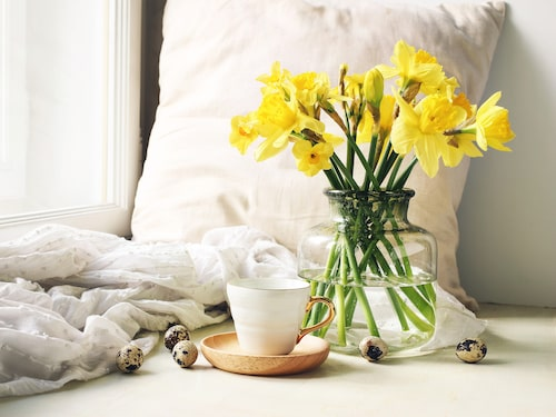 Påskliljor som snittblommor lyser upp hemmet.