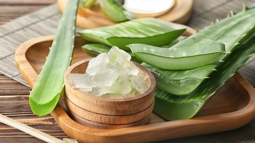 Aloe vera är en så kallad afodillväxt och räknas som en av världens äldsta läkeväxter.