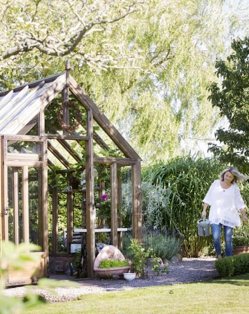 I växthuset är det skuggigt och skönt. Till höger syns det höga elefantgräset som har ett vackert ljud när det fläktar.