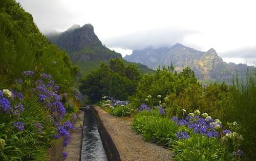 Längs levadorna växer avokado, passionsfrukt, och ståtliga Afrikas blå lilja.