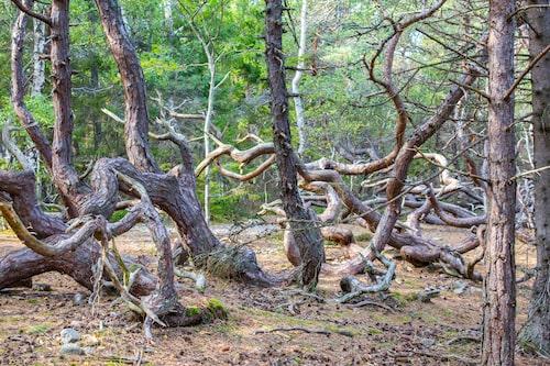 Trolska Trollskogen gör rätt för sitt namn!