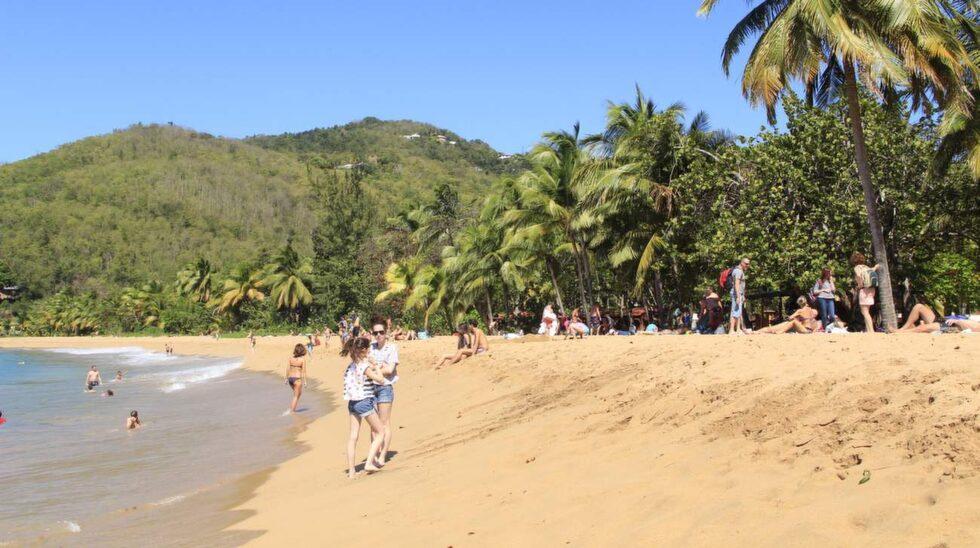 Mellan hotellet Fort Royal och Deshaies finns flera vackra stränder där man kan sitta i den gyllengula sanden under palmerna.