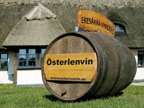 Österlenvin odlar främst druvorna solaris och rondo.