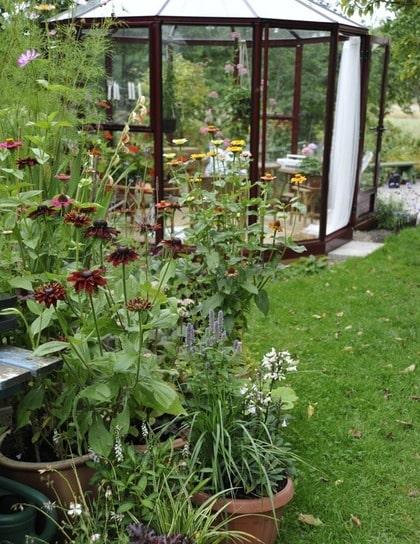 FÖRLÄNGER. Ett växthus är användbart, förutom som lusthus, till att förlänga odlingssäsongen. Där kan man starta plantuppdragningen lite tidigare på våren, kanske med hjälp av en värmefläkt i början. På hösten kan livet för plantorna i krukor förlängas.