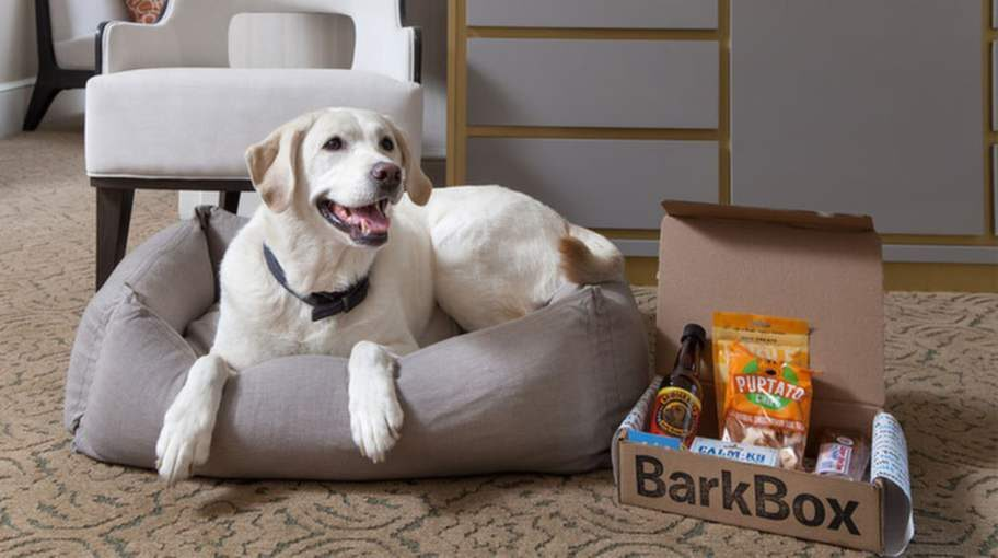 På The Benjamin i New York, USA, bjuds din hund på en BarkBox.