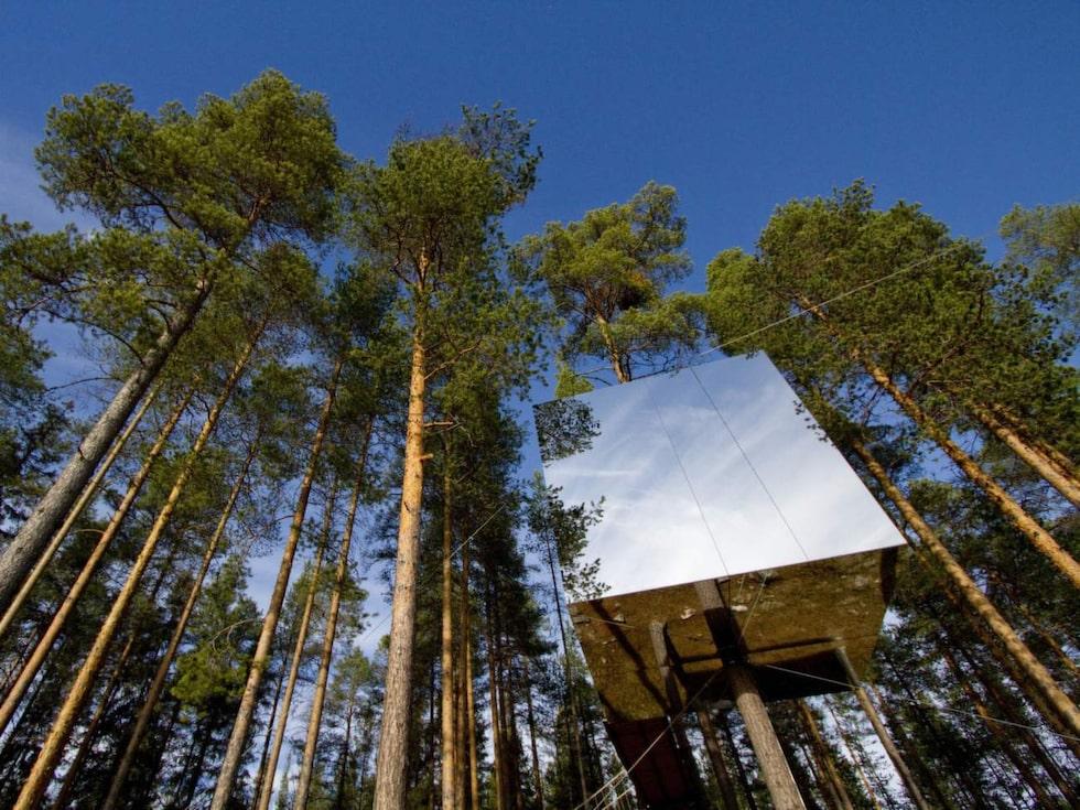 Ta er tillflykt till en trädkoja – Treehotel har romantiska veckoslutspaket.