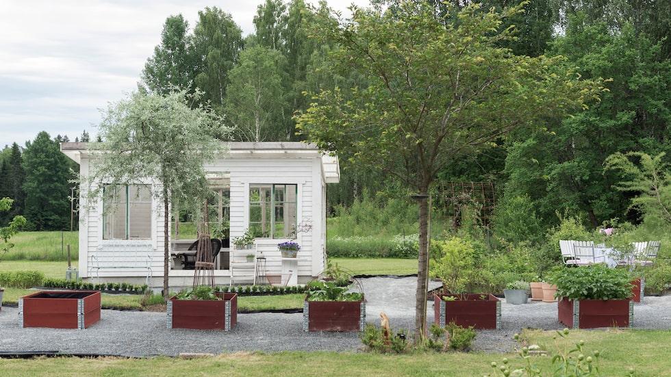 Camilla och Joakim har byggt växthuset själva och återanvänt gamla fönster som tidigare suttit i huset. Träd från deras egen skog har de sågat upp i sitt eget sågverk till regelverket. Växthusets panel är köpt i bygghandel. Framför växthuset står ett vackert silverpäronträd som också kallas för nordiska olivträd. Odlingslådorna är byggda av pallkragar som målats med Falu rödfärg.