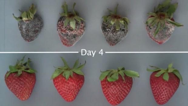 Så smart slipper du övermogen frukt och grönt