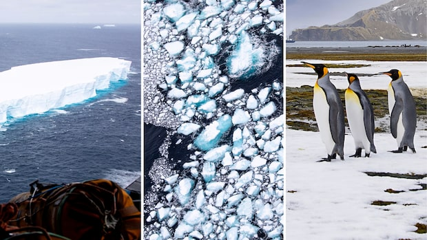 Isberget bröts itu –fortfarande ett hot mot djuren