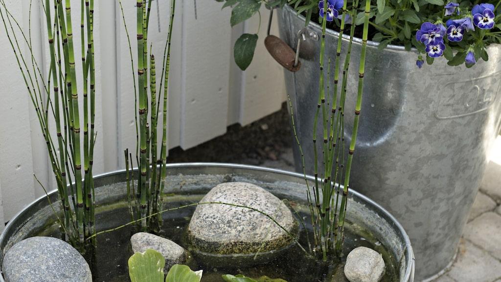 Johanna har skapat ett vackert vattenarrangemang i ett stort zinktråg, ett smart och praktiskt sätt om man vill ta in vatten i trädgården men inte har möjlghet att anlägga en damm eller fontän.