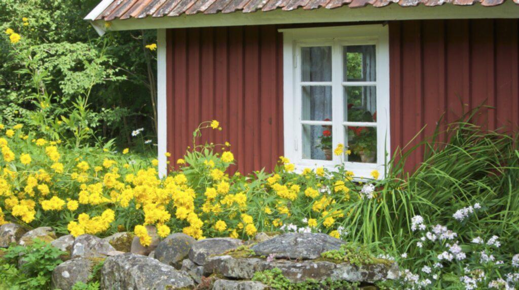 Många som har ett falurött fritidshus är glada när det kommer till ommålning. Den klassiska, gamla färgen är billig och lättskött.