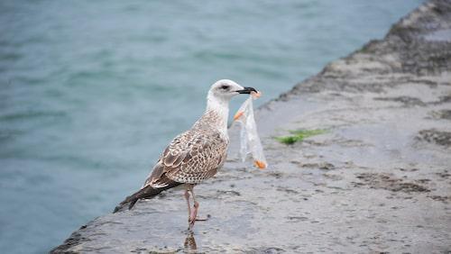 Plast som hamnar i naturen riskerar att skada eller döda djur.