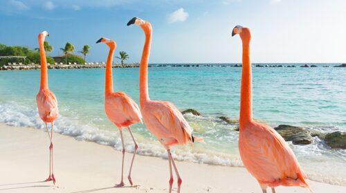 Upplev en exotisk mix på Happy Island.