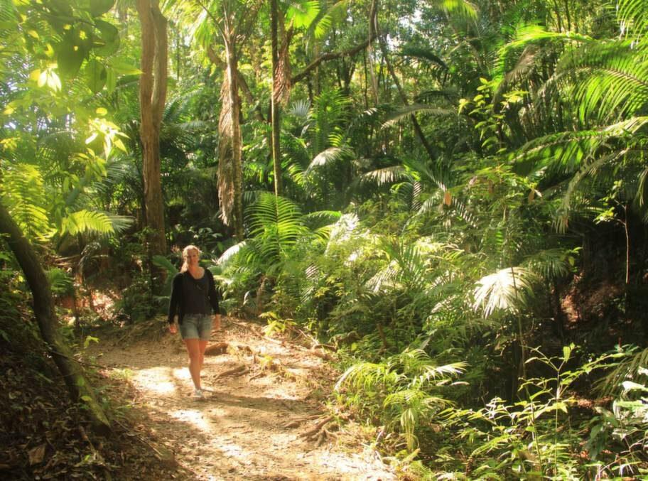 Slösande grönska i Tobago Forest Reserve. I djungeln som är naturreservat sedan 1776 har man chans att se kolibrier och många andra fåglar.