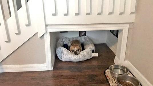 Som sagt: hunden är människans bästa vän – eller är det tvärt om i det här fallet?