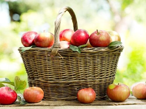 Äpplen innehåller gott om antioxidanter