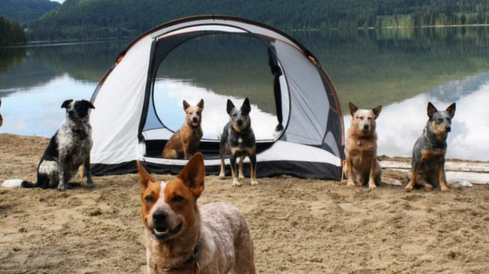 "<p>Sajten ""Camping with dogs"" gör succé på nätet.<br></p>"