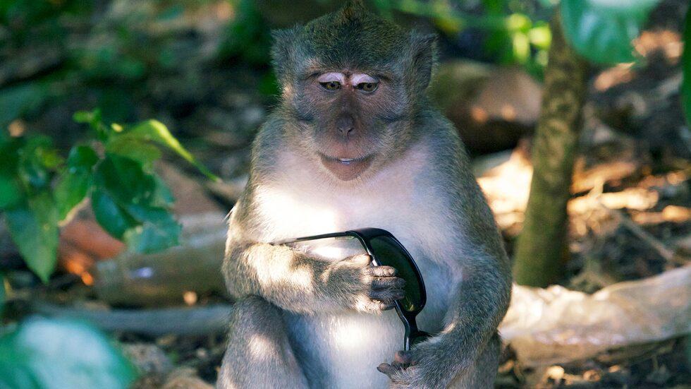 Aporna här är smarta nog att förstå begrepp som utpressning och förhandling.