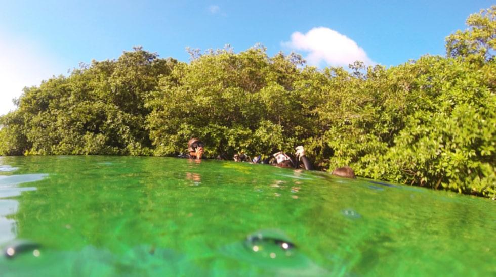Naturliga pooler. Cenotes är mynningar till underjordiska Grottsystem. På bilden Casa Cenote.