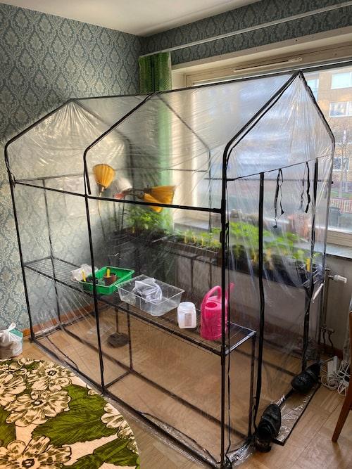 I matsalen i lägenheten har familjen trevliga stunder med släkt och vänner. Här har John Taylor också sitt kontor. För att inte katten ska skapa kaos och fördärva växterna har han köpt ett plastväxthus. I det drar han upp meloner, paprika, tomater, chili och kål.