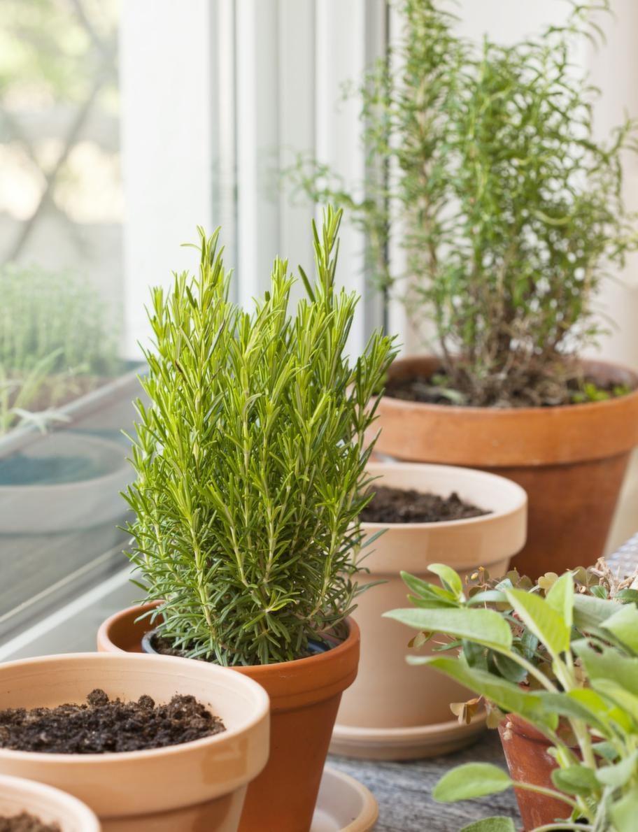 """Gröna fingrar. Paul odlar sin trädgård. Intill altandörrarna står örter och sådant som är """"på väg ut"""" snart."""