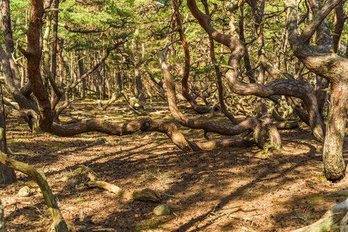 Trollskogen ska man inte missa om man befinner sig på Öland.