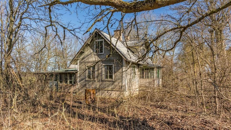 Det gamla huset från 1893 ligger gömt i snåren. Hela tomten är igenvuxen.