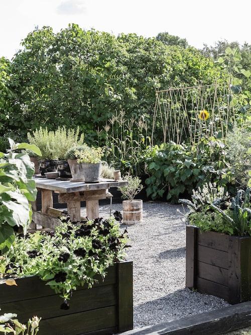 """Monica är noga när hon väljer färger och former på krukor och växter. """"Jag vill att det ska vara vackert och estetiskt i hela trädgården. Givet hos mig är kronärtskockor, bönor, grönkål, svartkål, morötter och sötpotatis – det är både snyggt i trädgården och väldigt gott på tallriken."""""""