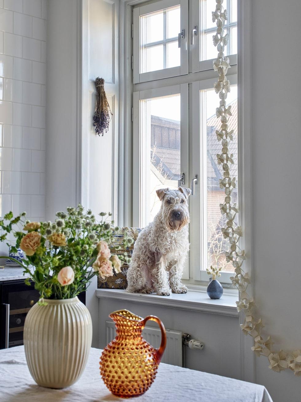 Hunden Charlie poserar glatt i köksfönstret och är ett återkommande motiv på Hannes bilder på Instagram. Vas, Kähler. Karaff, Tambur.