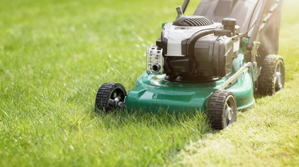 Viktigt är också att hålla gräset kortklippt.