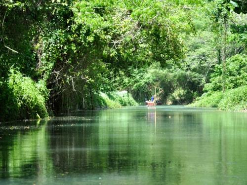 Jamaica har inte bara stränder – regnskogen är också värd ett besök.