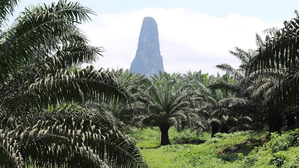 På Praia da Banana, Sao Tomé och Príncipe, finns vacker natur.