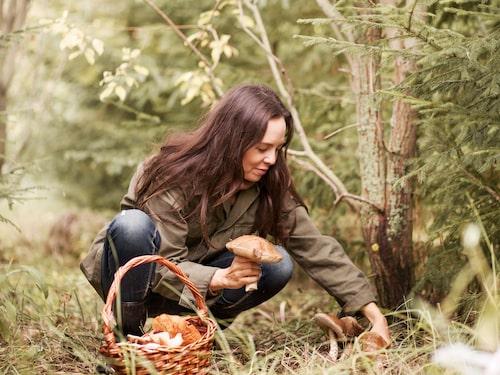 Se upp i svamp- och bärskogen – fästingarna trivs utmärkt även långt inpå hösten.