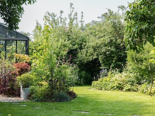 I rabatten växer ett aprikosträd och ett ambraträd. Syrenbuddlejan 'Black knight' lockar till sig mängder av fjärilar.