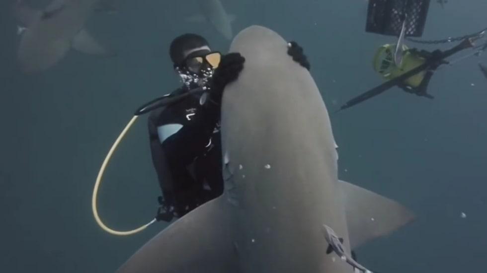<p>Vid ett tillfälle får dykaren kolla på sin klocka – hajen verkar inte alls vilja sluta kela.</p>