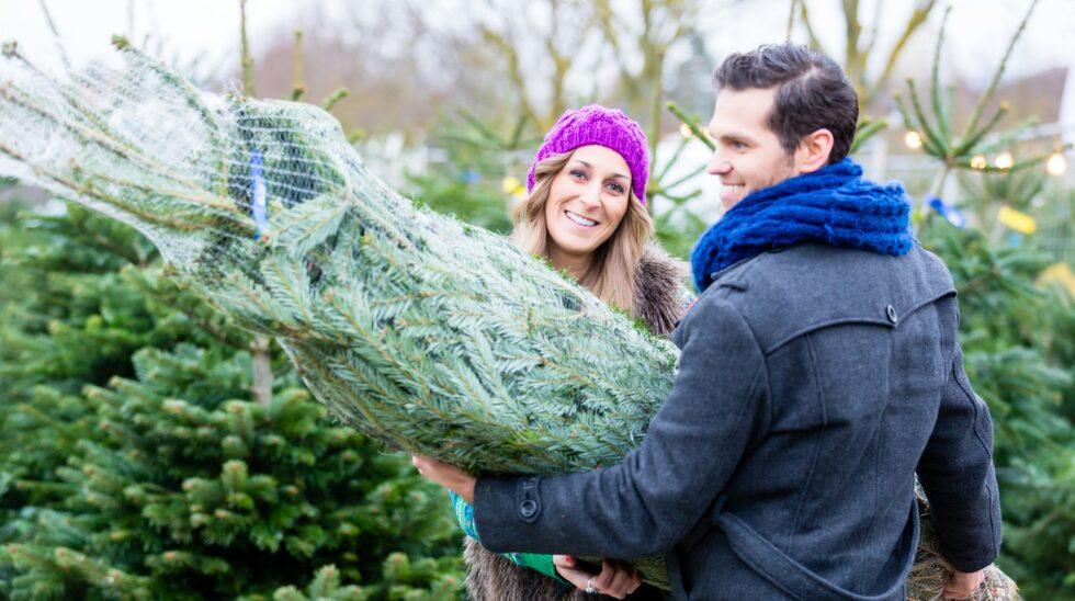 Dags att köpa julgran! Men vad är egentligen bäst – en äkta eller en i plast?