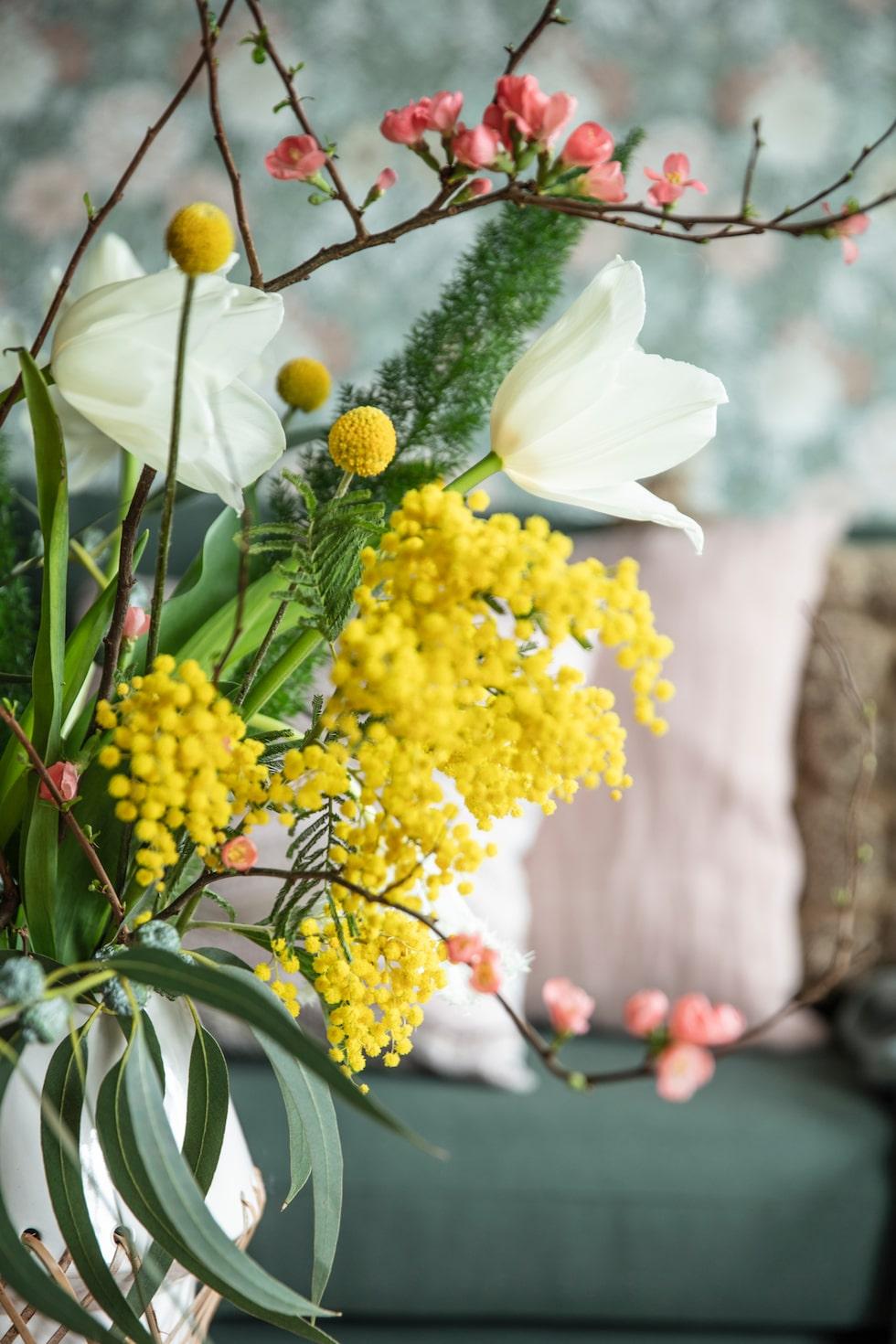 Blommor som vit tulpan, mimosa, solboll 'Billy boll' och kvistar med körsbärsblom ger omedelbart vårstämning.